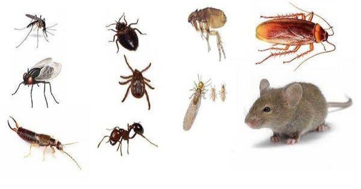 8 facons efficaces de chasser les insectes de votre maison sans produits chimiques 1