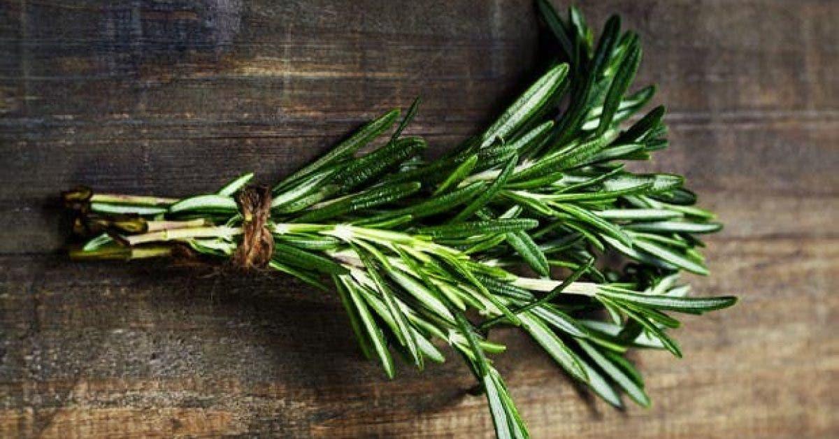 8 herbes qui ameliorent la memoire11