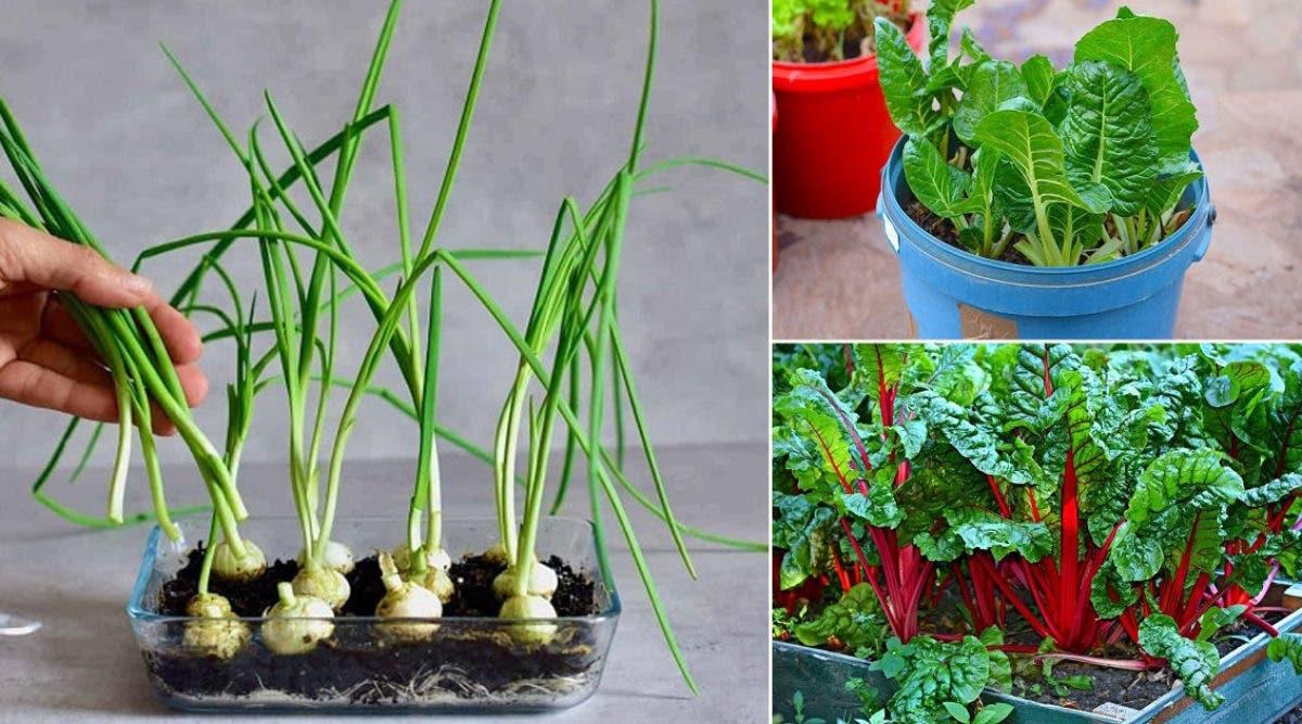 8-legumes-que-vous-achetez-une-fois-et-faites-repousser-a-linfini