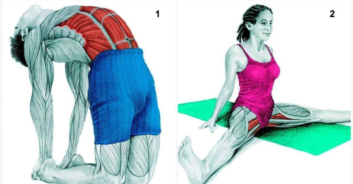 8-photos-pour-trouver-les-positions-qui-etirent-les-muscles-de-votre-choix