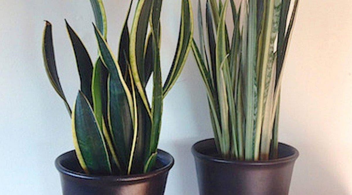 Les Filles De L Air Plante 8 plantes pour votre chambre à coucher qui vont améliorer