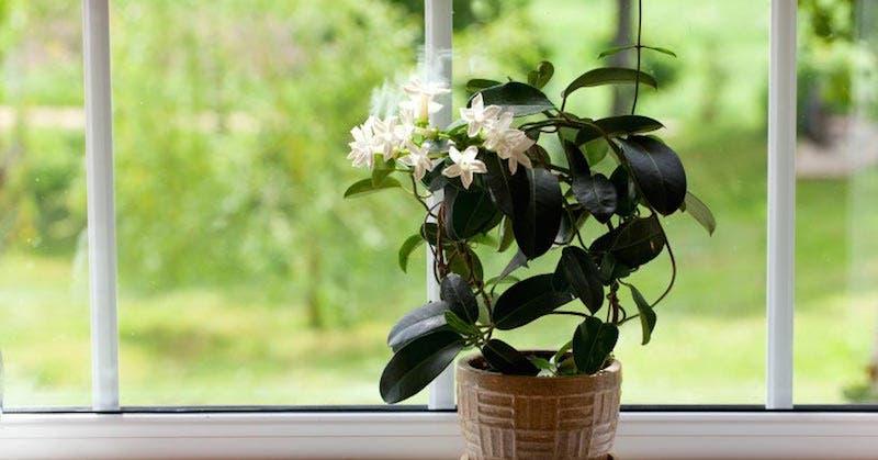plantes pour votre chambre à coucher