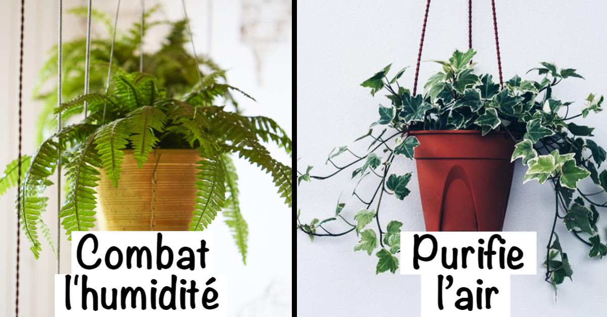 9-plantes-dinterieur-pour-ameliorer-lair-de-votre-maison