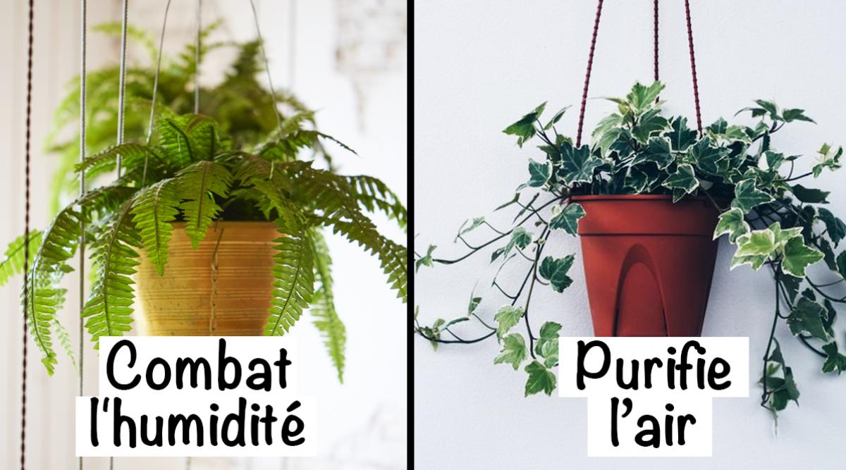 9 plantes d'intérieur pour améliorer l'air de votre maison