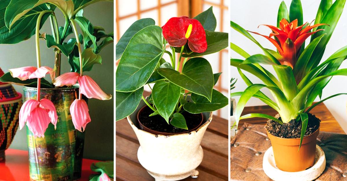 9 plantes d'intérieur qui fleurissent facilement à la maison