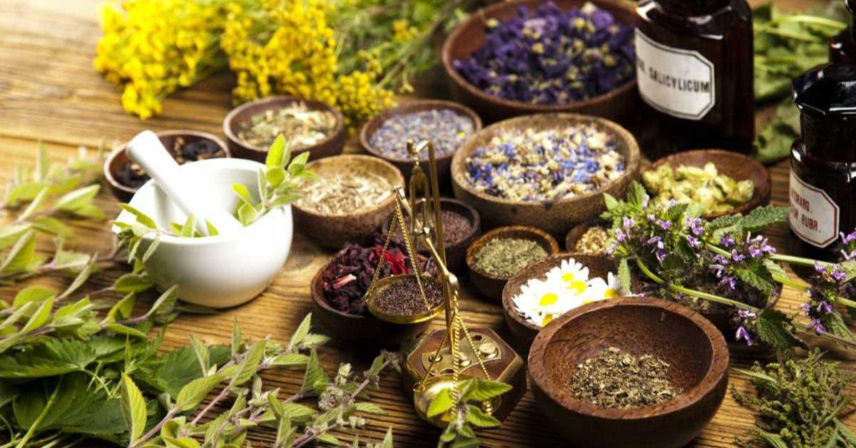 9-plantes-efficaces-pour-soulager-les-maux-du-quotidien