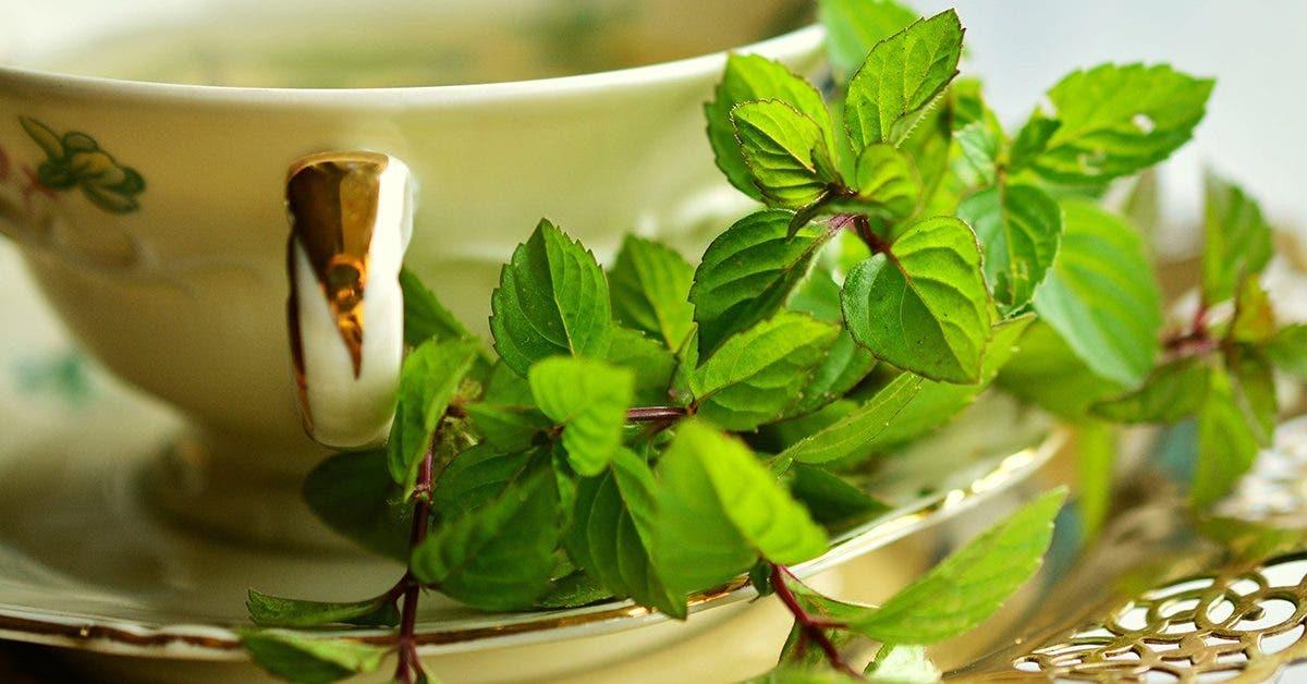 9-plantes-qui-nettoient-vos-poumons-et-vous-aident-a-respirer