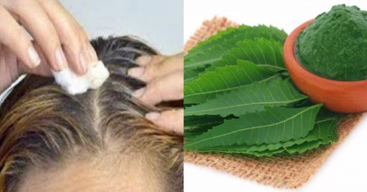 Appliquez ceci sur votre tête et tous vos cheveux blancs vont disparaître