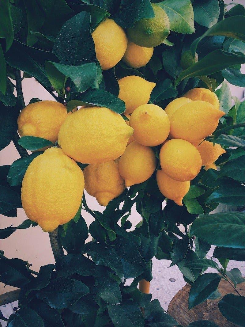 Arrêtez de gaspiller de l'argent en achetant des citrons