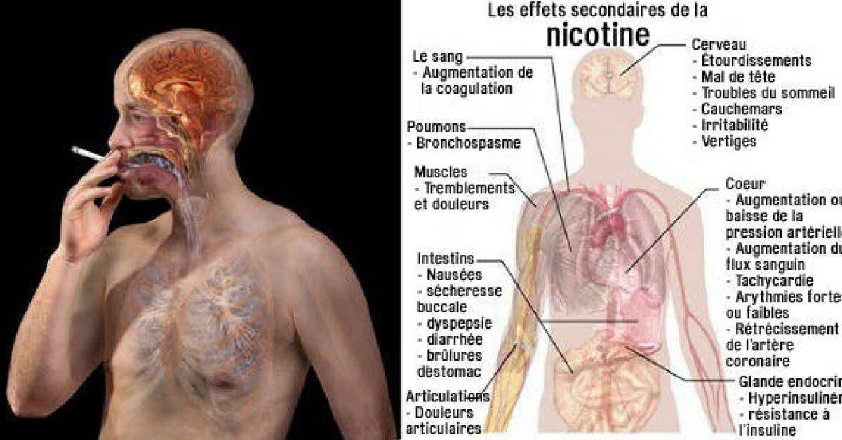 Avis aux fumeurs Ces aliments vont nettoyer votre corps de la nicotine 1