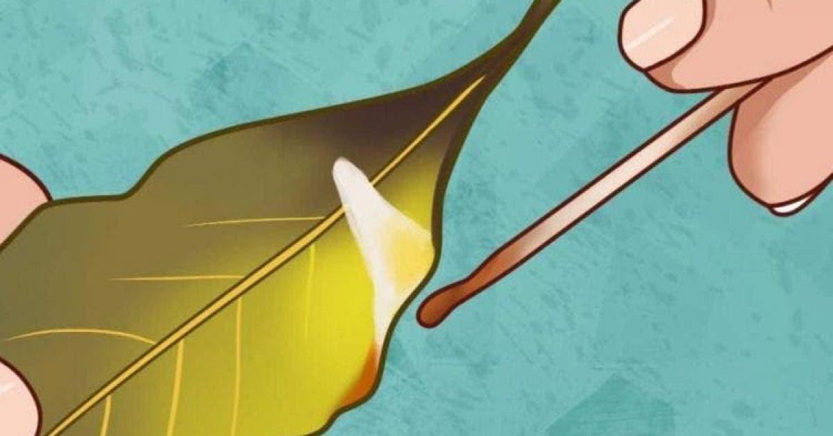 Les feuilles de laurier sont très connues pour leurs vertus. Brûlez-les dans votre maison et regardez ce qui se passe !