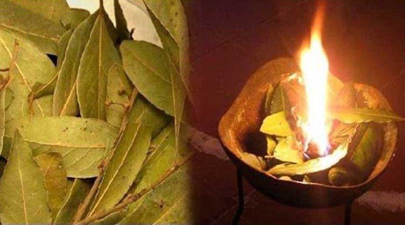 Brûlez les feuilles de Laurier chez vous