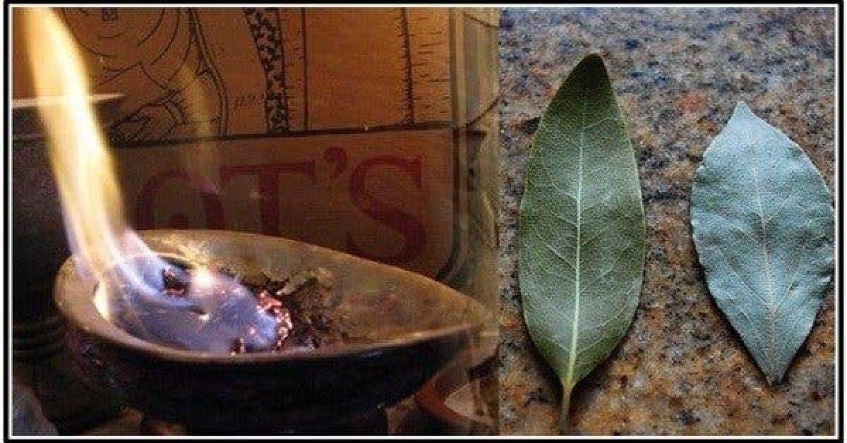Brûlez des feuilles de laurier dans votre maison et regardez ce qui se passe après 10 minutes