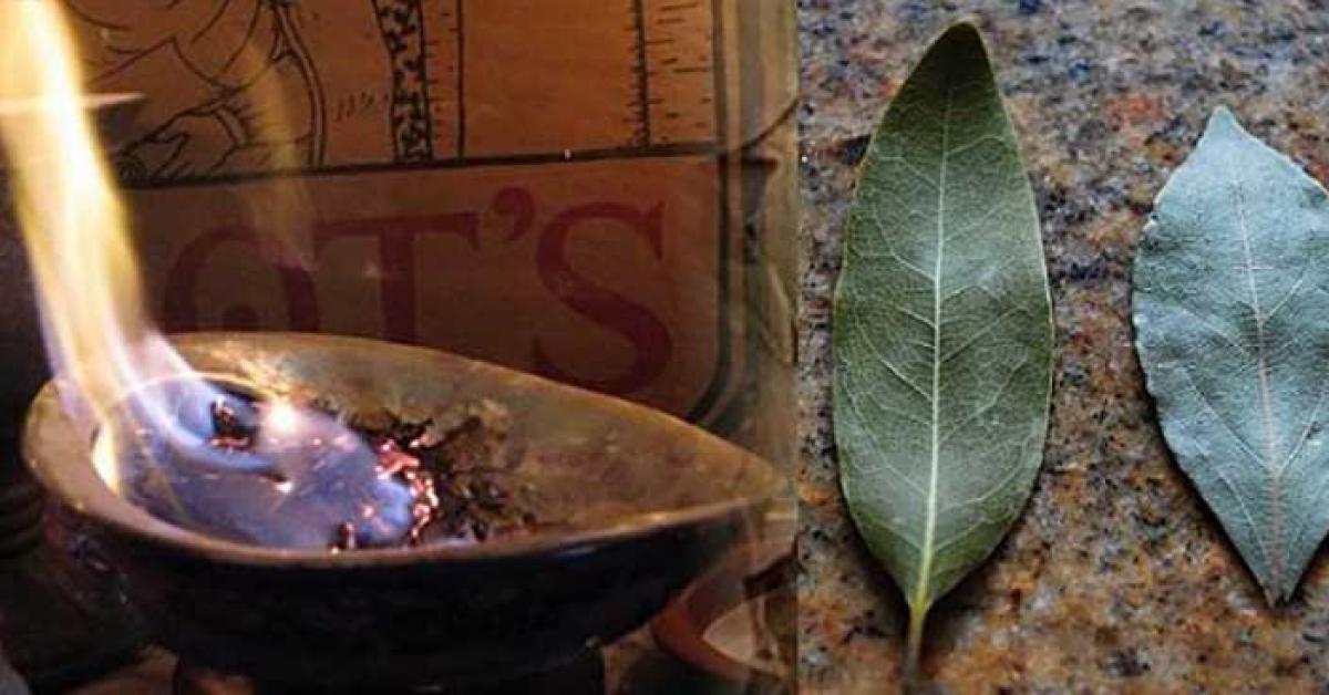 Brulez une feuille de laurier dans votre maison 1
