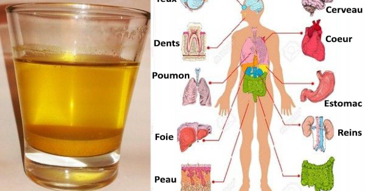 Buvez de l'eau au citron et au miel le matin