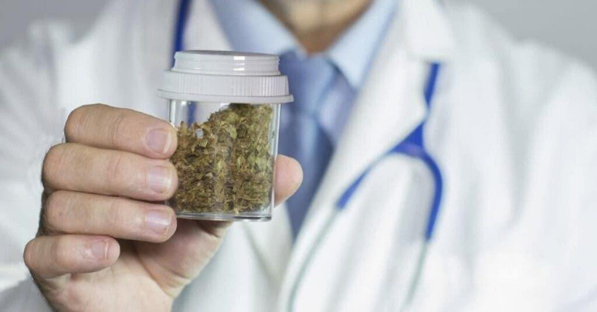 Des médecins sont autorisés à prescrire du cannabis à la place de médicaments