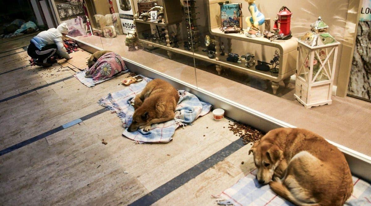 Ce centre commercial fait quelque chose d'incroyable pour les chiens !