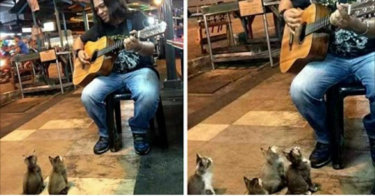 Ce chanteur de rue a été ignoré par tout le monde quatre chatons sont venus lui témoigner son soutien