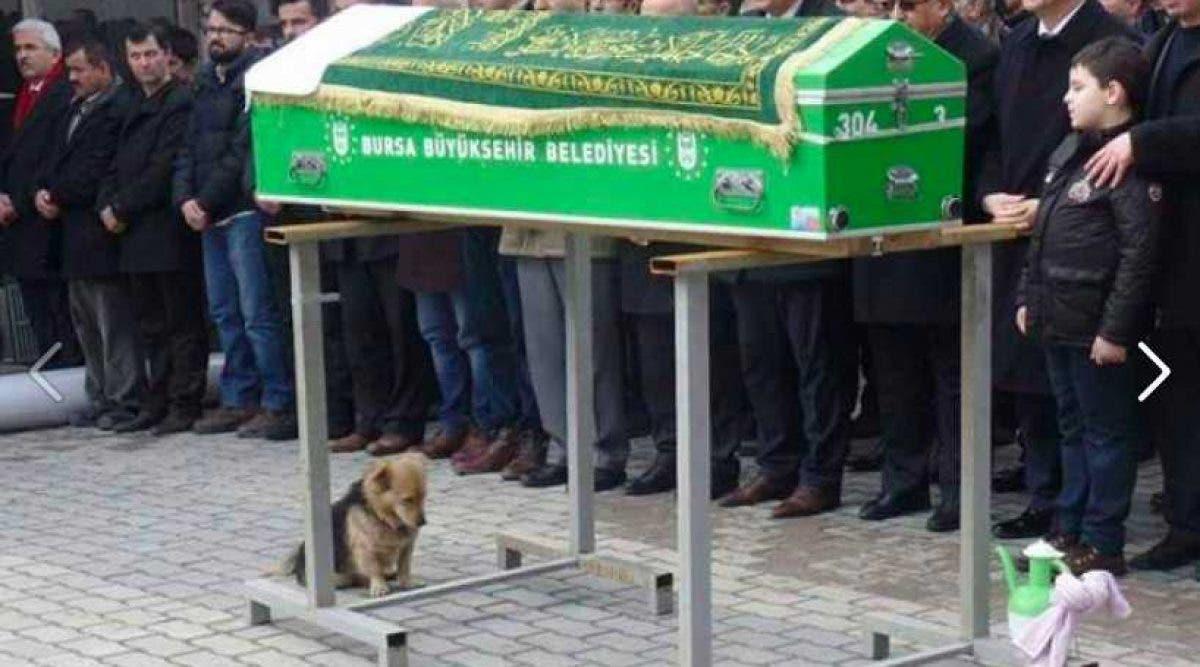 Ce chien est assis avec le regard triste vers le cercueil