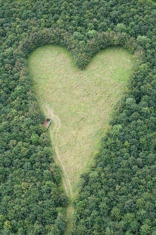 Ce mari plante des milliers d'arbres pour honorer son épouse morte