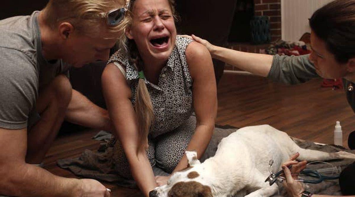 photographe capture les derniers moments émouvants entre les animaux de compagnie et leurs propriétaires