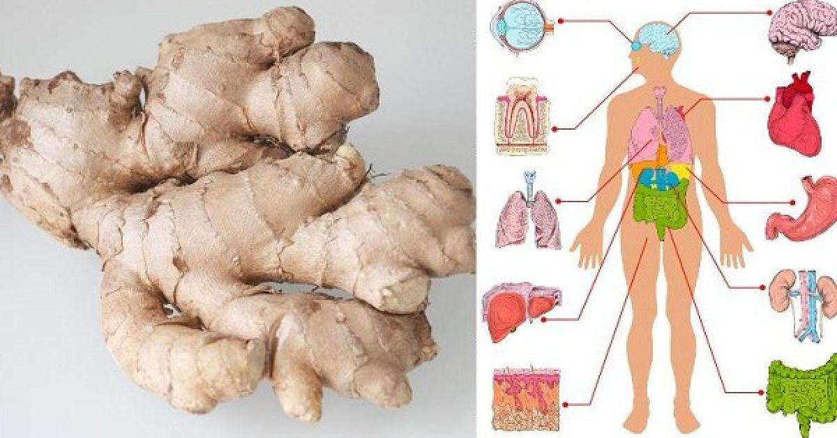Ce qui arrive quand vous mangez du gingembre chaque jour pendant 1 mois