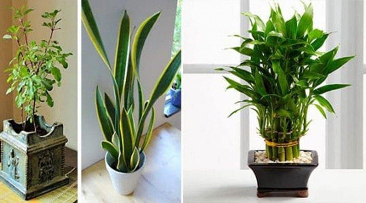 Ces 11 plantes attirent l'énergie positive dans votre maison !