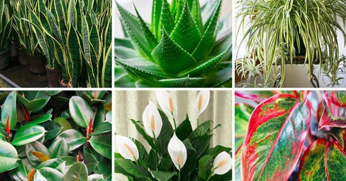 Ces plantes sont des bombes a oxygene et elles purifient lair dans votre maison 1