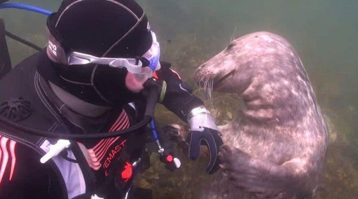 Cet homme ne comprend pas ce que le phoque veux – lorsqu' il lui tend sa main, l'incroyable se produit