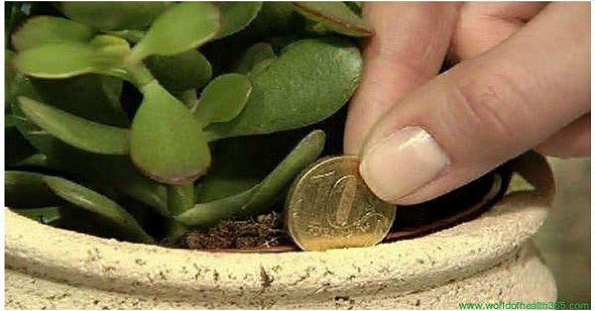 Cette plante dans votre maison fonctionne comme un aimant pour la richesse et l'énergie positive