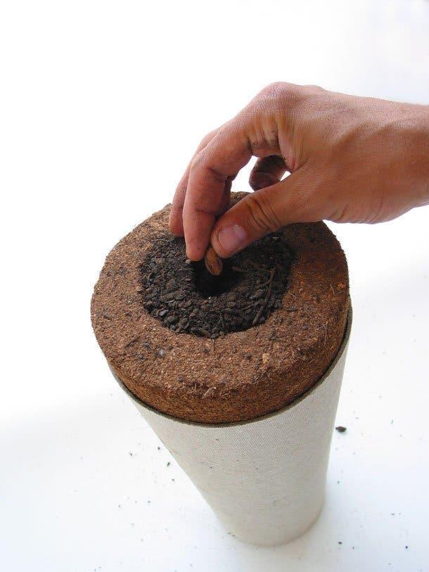 Cette urne funéraire fera de vous un arbre après votre mort