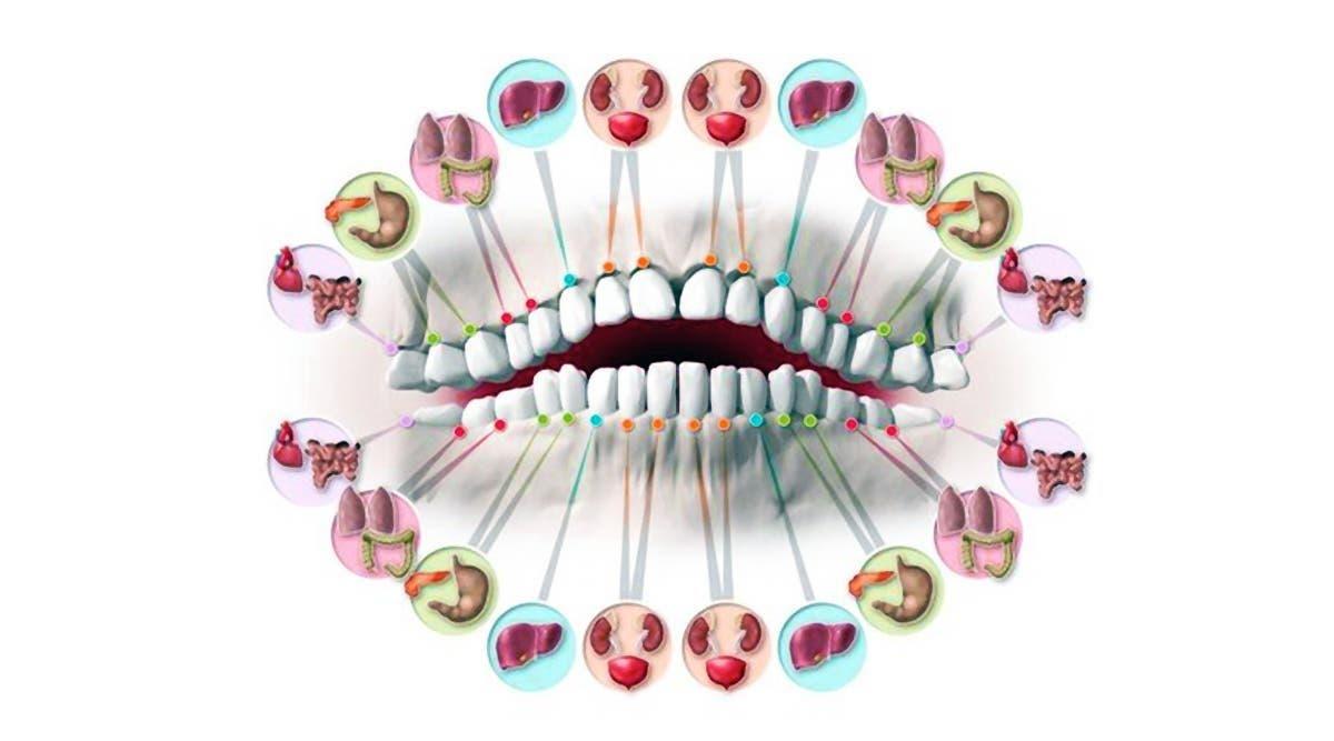 Chacune des dents est reliée à un organe et chaque douleur indique un problème de santé