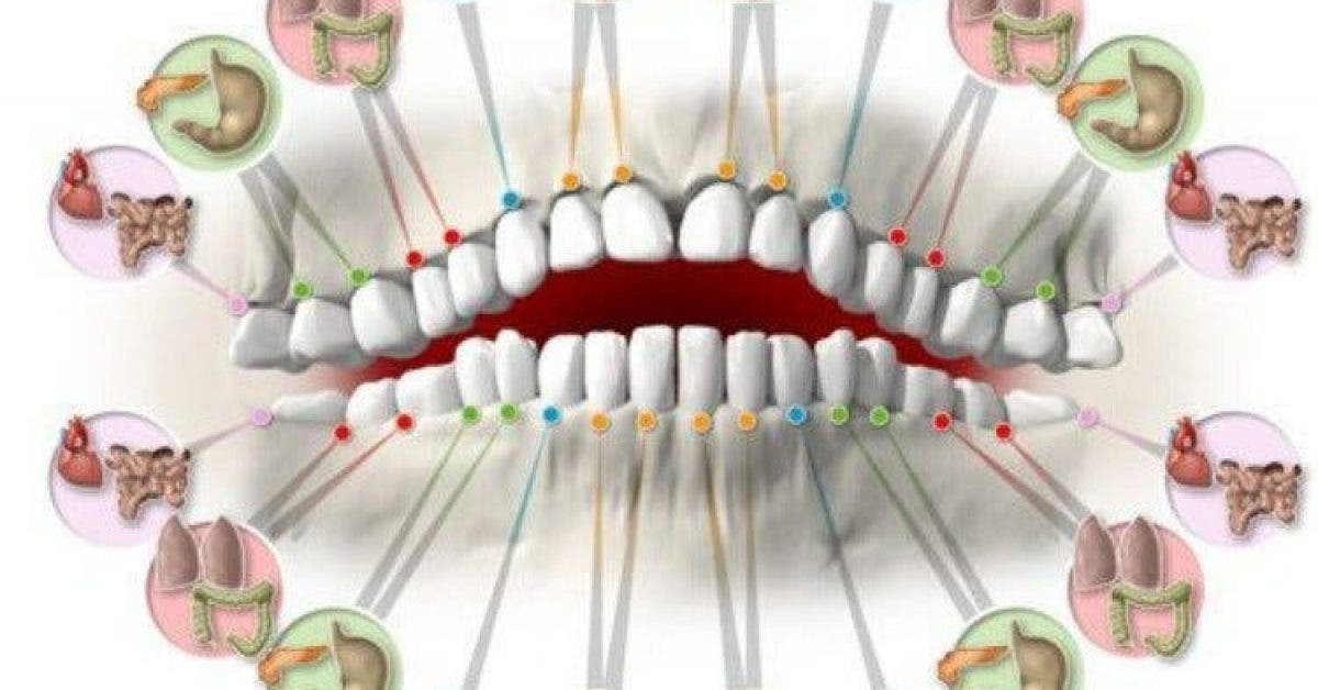 Chaque dent est reliée à un organe et chaque douleur peut indiquer un problème de santé