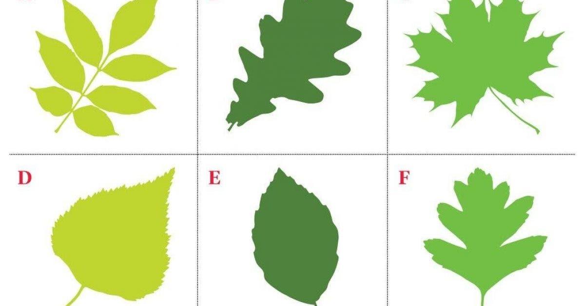 Choisissez une feuille et découvrez ce que sa forme révèle sur votre personnalité