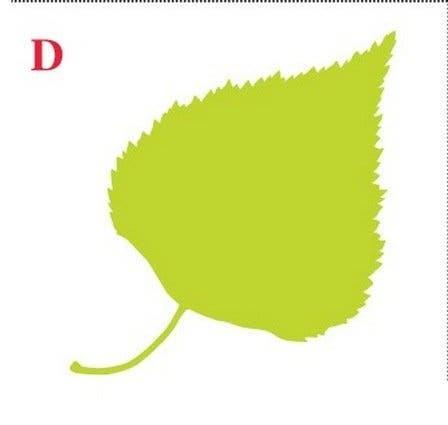 Choisissez une feuille et decouvrez ce que sa forme revele sur votre personnalite 4 1