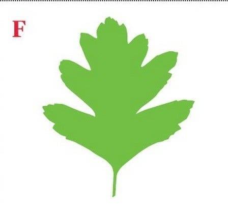 Choisissez une feuille et decouvrez ce que sa forme revele sur votre personnalite 6 1