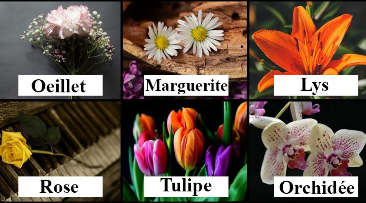 Choisissez une fleur et découvrez le genre de femme que vous êtes