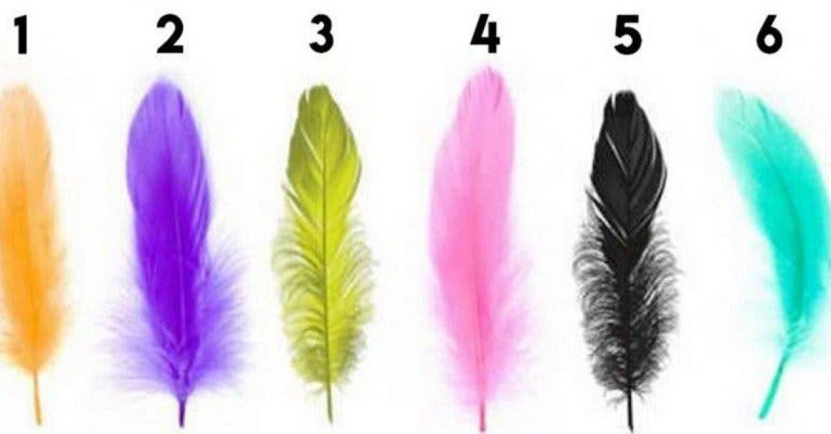 Choisissez une plume et découvrez les traits cachés de votre personnalité