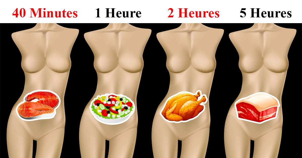 digérer aliments