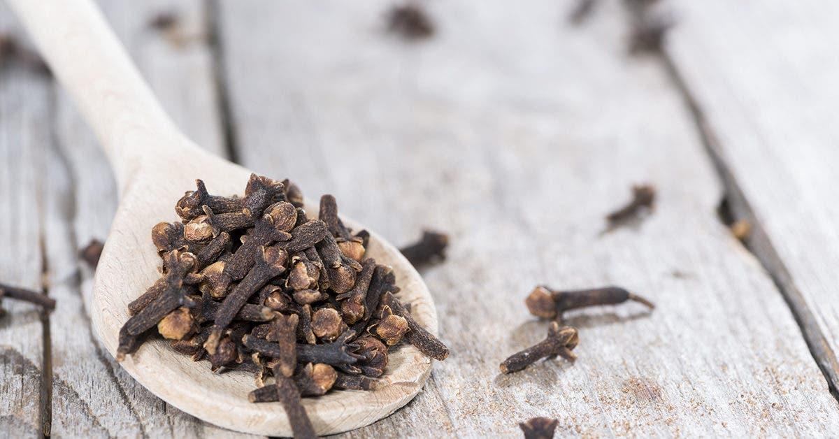 éloigner les termites