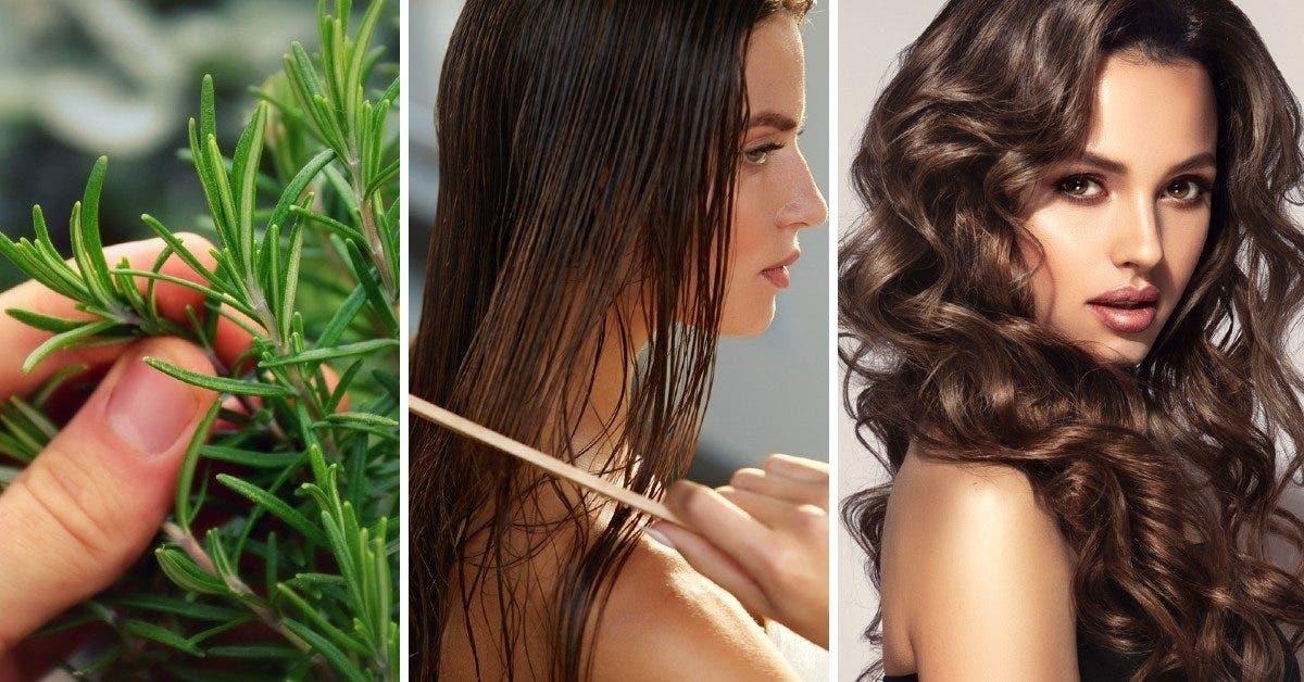 Comment utiliser le romarin pour stopper la chute de cheveux, les rendre brillants et les faire pousser ?