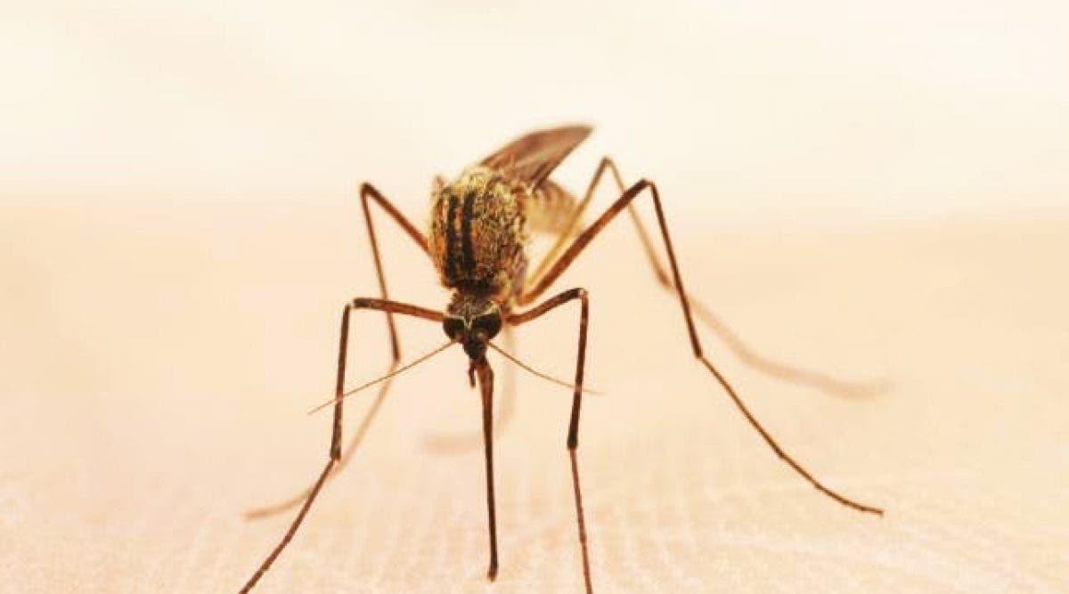 Voici comment ne plus se faire piquer par les moustiques !
