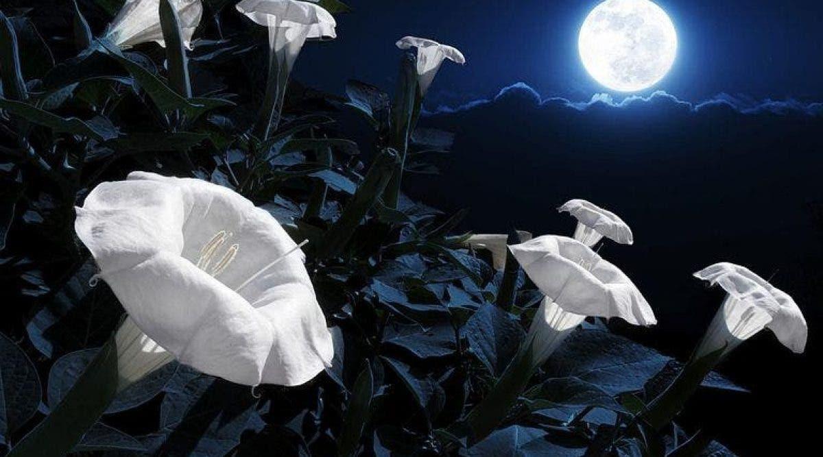 Creez votre propre jardin avec des fleurs qui fleurissent la nuit