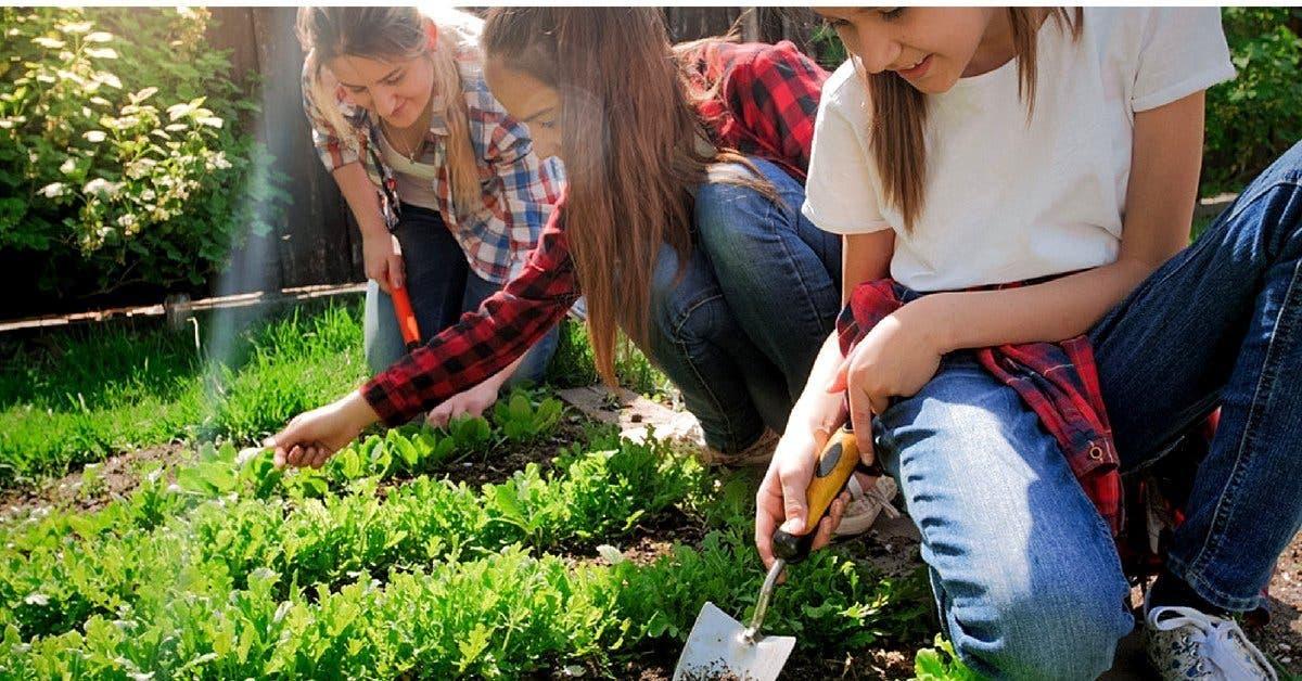 Dans ce college parisien le jardinage remplace des heures de colle 1