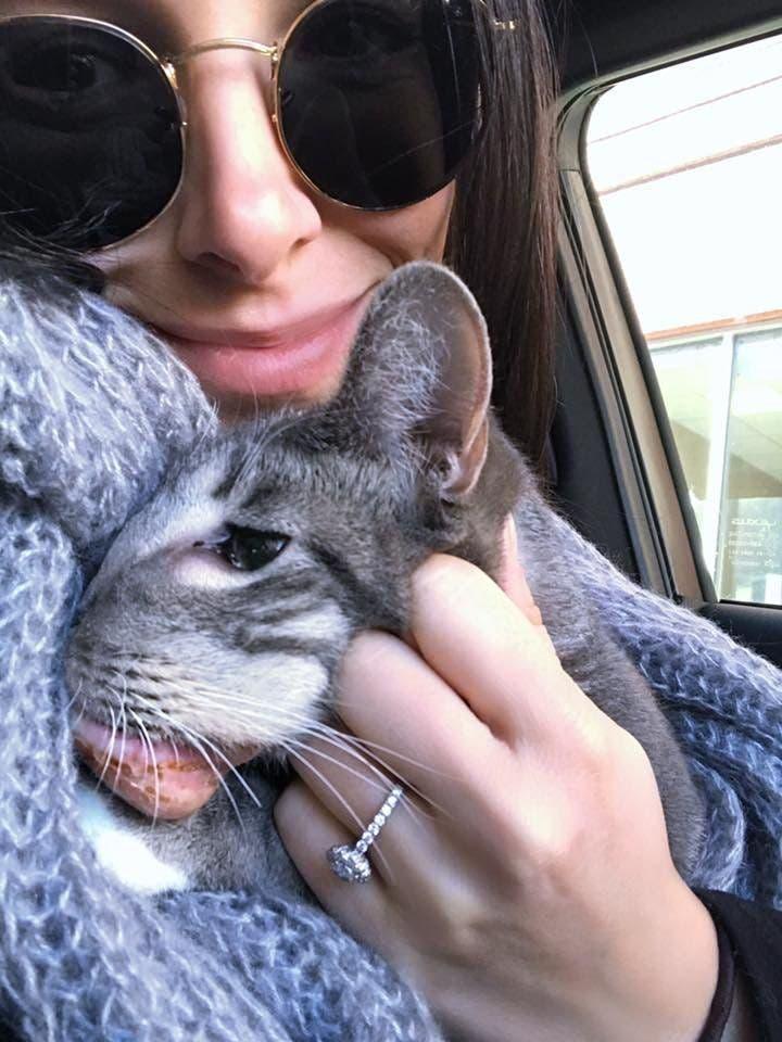 un chat atteint d'une tumeur qui allait lui coûter la vie
