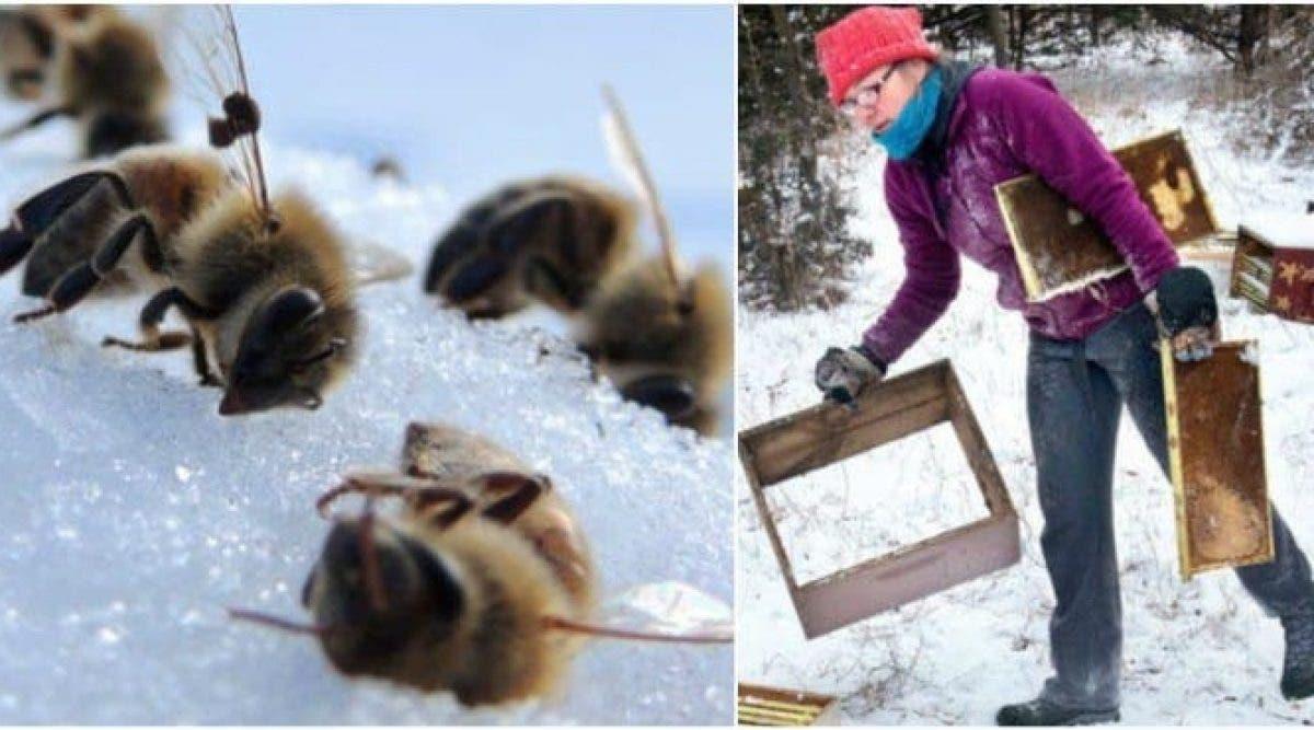 Des garçons de 12 et 13 ans risquent 10 ans de prison pour avoir tué un demi-million d'abeilles