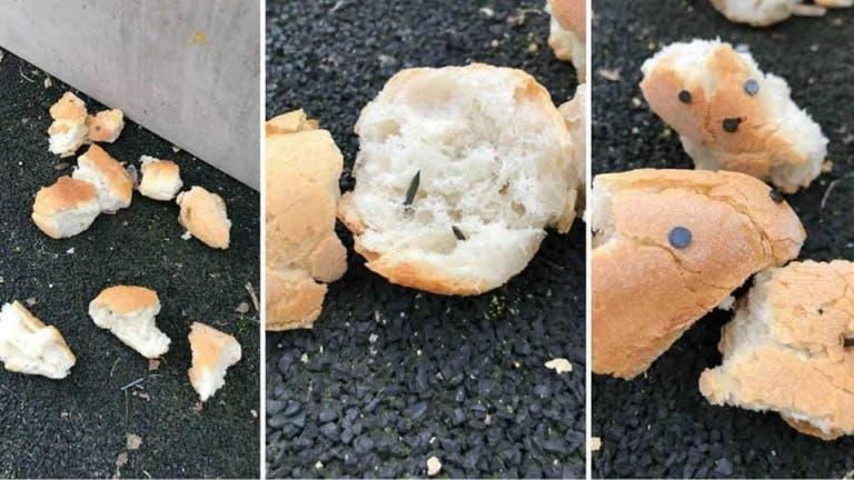 Des gens cruels nourrissent les chiens avec du pain et des saucisses contenant des clous et des aiguilles