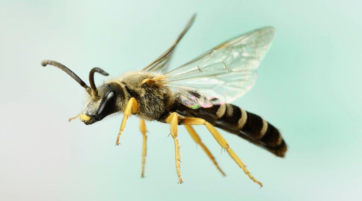 médecins découvrent 4 abeilles vivant à l'intérieur de l'oeil
