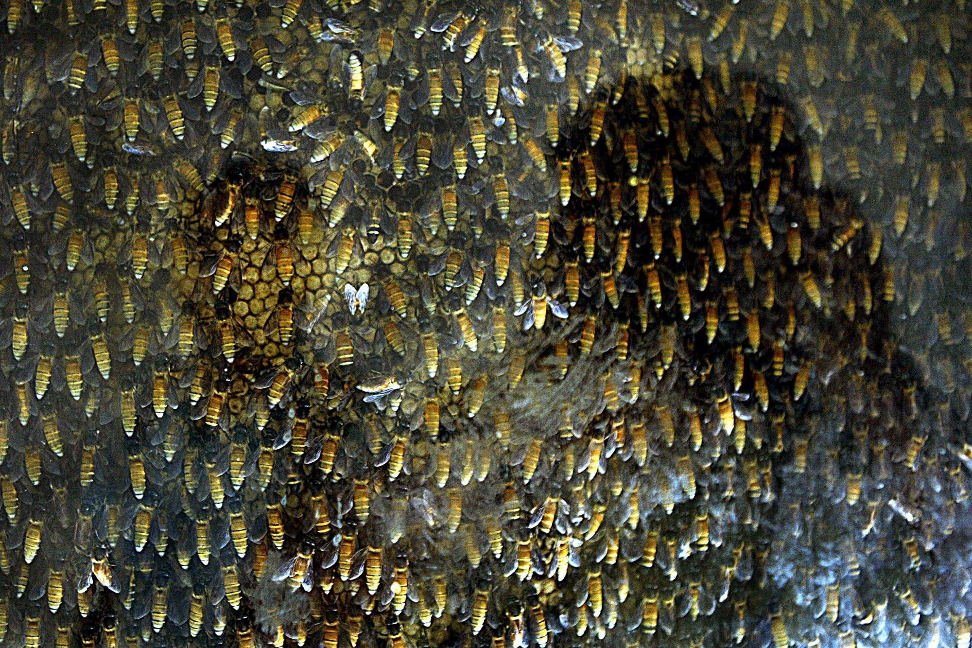 Des médecins découvrent 4 abeilles vivant à l'intérieur de l'oeil d'une femme et se nourrissant de ses larmes
