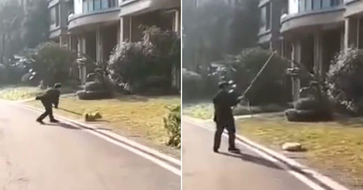 Des policiers tuent des chiens en pleine rue pour les empecher de propager le coronavirus